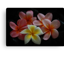Christmas Frangipani 2011 Canvas Print