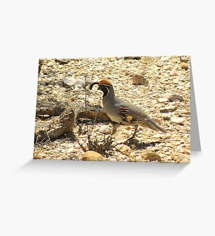 Gambels Quail ~ Male Greeting Card