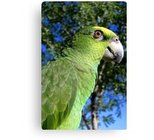 Charlie ~ Orange-winged Amazon Canvas Print