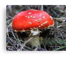 Mario Kart Mushroom Canvas Print