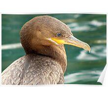 Neotropic Cormorant Poster