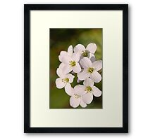 White Wildflowers Framed Print