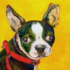 Dash the Boston Terrier by Madison Cowles
