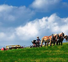 Amish farmer plowing by woodnimages