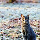 Kitty sunning on a frosty winter morning....... by NatureGreeting Cards ©ccwri