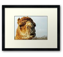 Aladdin - George Washington's Camel.  Framed Print