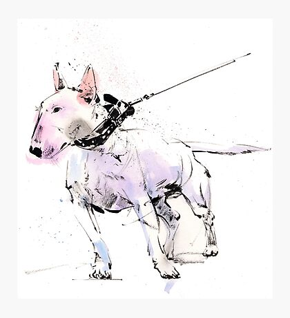 English Bull Terrier Photographic Print