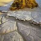Death Valley Mudflat by Inge Johnsson