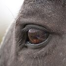Horses we Love by Tracey  Dryka