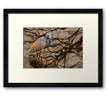 Colors in the Water Framed Print