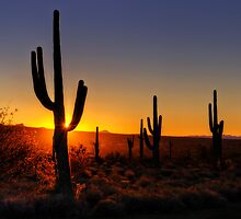 Christmas Morning in Arizona  by Saija  Lehtonen