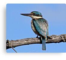 Sacred kingfisher Canvas Print