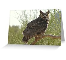 Great Horned Owl ~ Captive (4yrs) Greeting Card