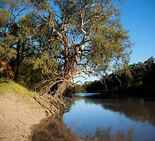 River Gum by Anna Ryan