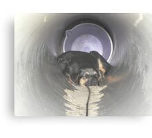 Pups In The Pipe Canvas Print