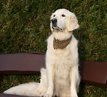 Ditte proudly wearing her leopard bandana  by Trine