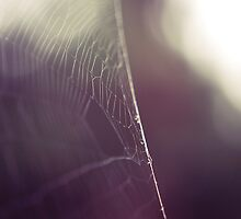 Spiderweb by jussta