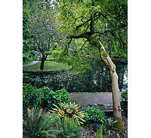 Burnham Beeches in Spring Photographic Print