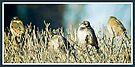 Sunshine Sparrows by KBritt