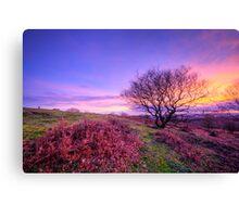 Beacon Hill Sunrise 1.0 Canvas Print