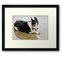 What's All The Fuss About? Framed Print