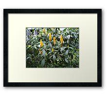 Garden, Sri Lanka Framed Print