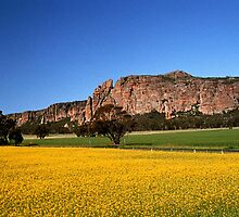 Golden Carpet...Mt Arapiles by Mark Radford