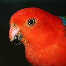 Christmas Colours - King Parrot  by aussiebushstick