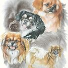 Tibetan Spaniel/Ghost by BarbBarcikKeith