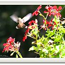 Hummingbird Revisited by Imagery
