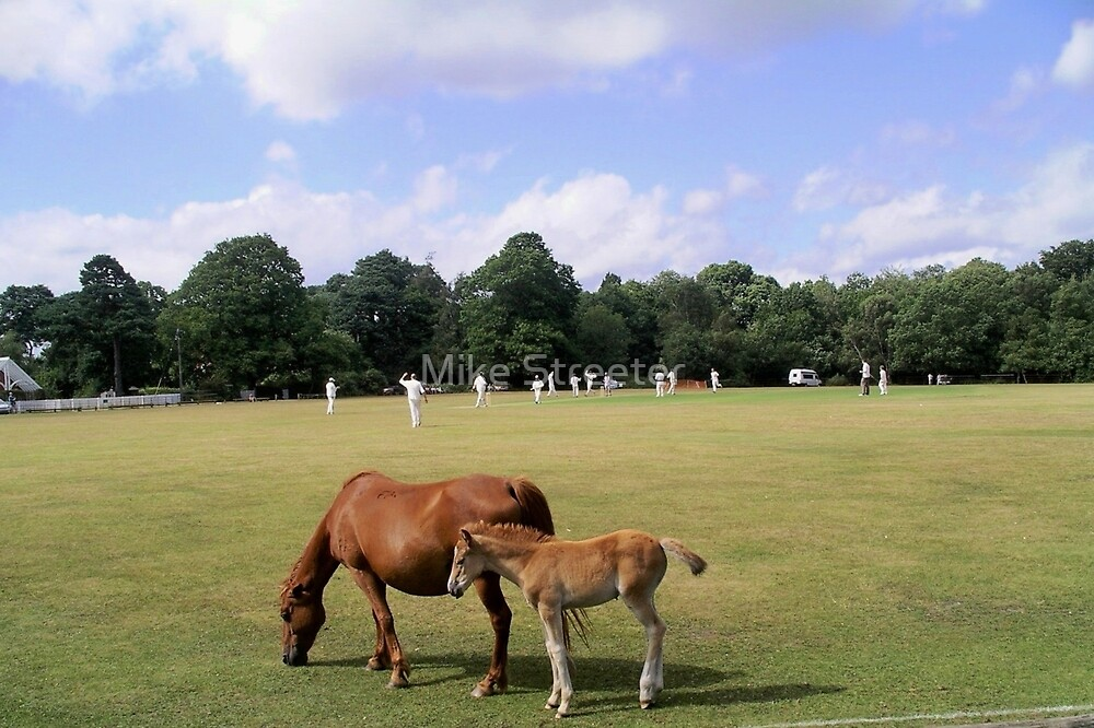 Village Cricket by Mike Streeter