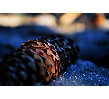Chilled Pine Cone Photographic Print