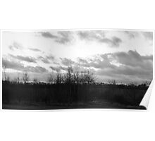 Trees, Litter and Cloudy Sky Poster