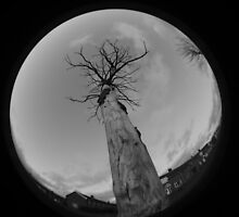 Tree Fisheye by Sarah Horsman