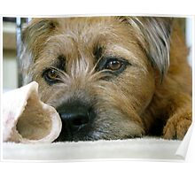 Dog with Bone Poster