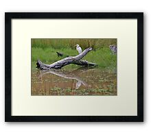 White Crane Framed Print