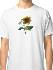 Sunflower Looking Down Classic T-Shirt