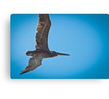 Pelican Overhead Canvas Print