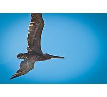Pelican Overhead Photographic Print