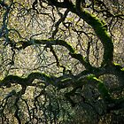 Entangled Branches by dwservingHim