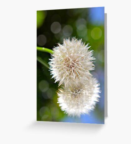 Fluffs..... Greeting Card