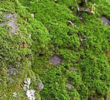 Moss  by Trish Peach
