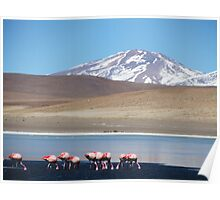 Flamingos With A View Poster