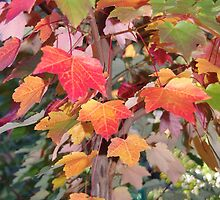 Autumn colour by Alison Murphy