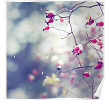 Wintery Rose Hips Poster