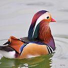 A Mandarin Duck (Aix galericulata) by Jeff Ore