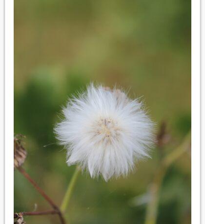 Beauty of the Dandelion Sticker