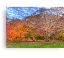 Fall Branches Canvas Print
