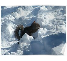 Squirrel in Snow, Central Park, New York  Poster