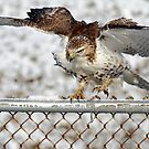Brrr!  The Fence is Cold! by Bill McMullen